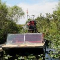 Buffalo Tiger's Airboat Tours