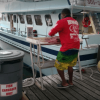 Reward Fishing Fleet